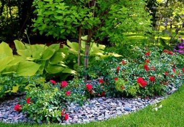 Kertépítés - Növénytelepítés